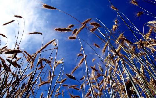 225778-GRASS.jpg