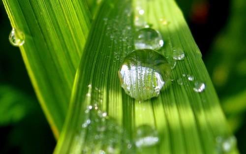 185455-grass.jpg